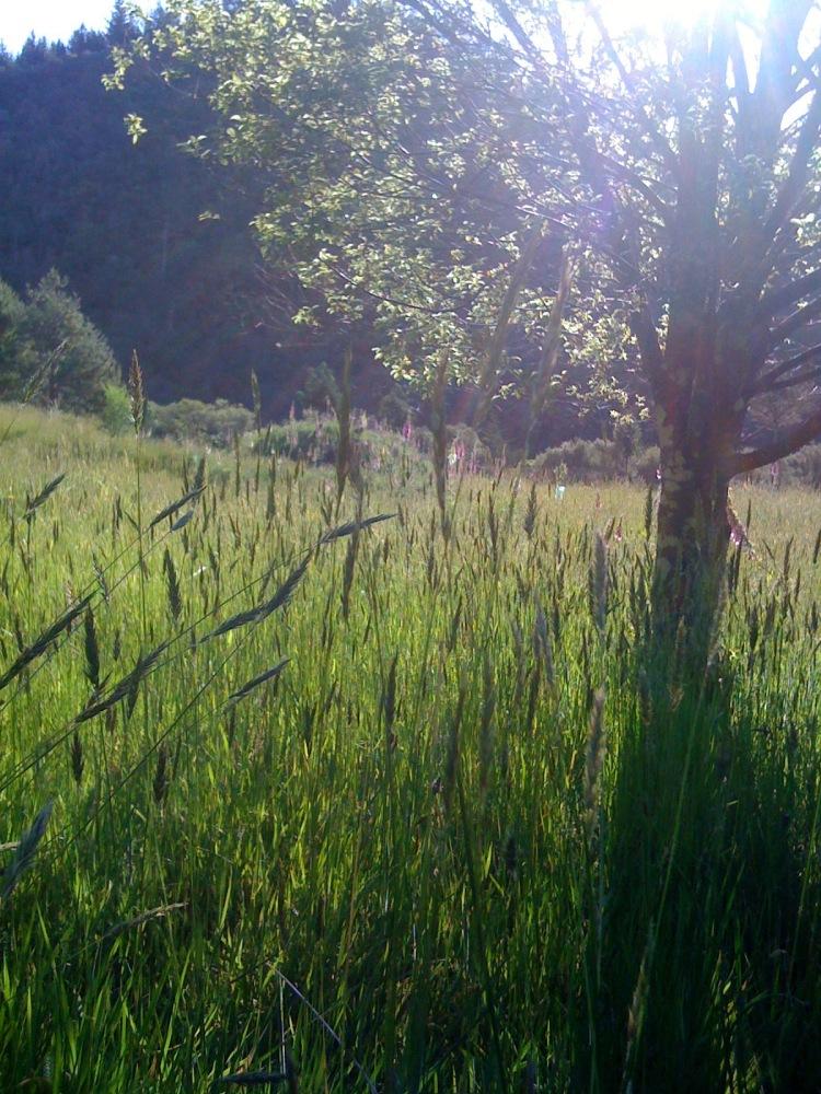 miscforest-1452601346-82.jpg